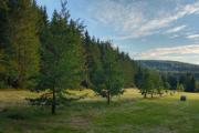 večerní les u Lukova II