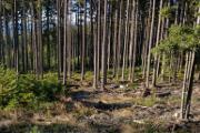 mladý a vzrostlý les