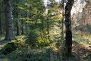 večerní les u Lukova III