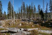 obnova lesa