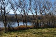 stromořadí na břehu Lipna I