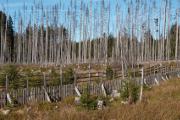 mladý les a souše