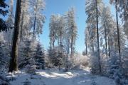 zimní les na Jelením vrchu - Doppler