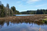 Huťský rybník I