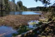 Huťský rybník II