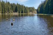 Uhlišťký rybník