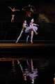 balet Labutí jezero IV