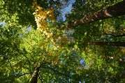 podzim pod Vysokou Bětou
